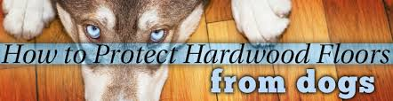 dog and hardwood floors pet friendly hardwood does it exist and where can i get it the