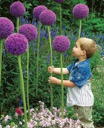 Backyard Plant Ideas Diy Ideas How To Make Your Backyard Wonderful This Summer