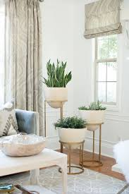 floor plants home decor plant decoration in living room meliving 922215cd30d3