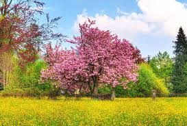 other beautiful nature colors spring scenary forest grass high
