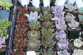 How To Save A Dying Plant 9 Secrets To Growing Succulent Plants Indoors Gardenista