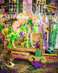 mardi gras masks martingale dog 43 likes 3 comments cairo byro cairobyro on instagram a