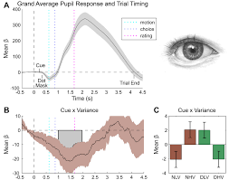 unexpected arousal modulates the influence of sensory noise on