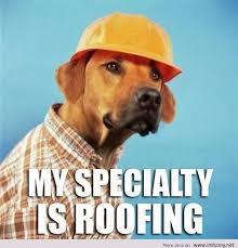 Silly Dog Meme - funny dog meme