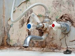 Mold Growing In Bathroom Mold 101 Effects On Human Health