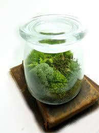 Moss Vase Filler Medium Vibe Jar Terrarium Mushroom Moss And Lichen