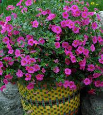 Garden Club Ideas Gardening Ideas 5057