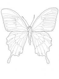 butterfly wing shapes drawingbutterfly 8 2 design shape