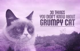 Frown Cat Meme - out of the two famous cat siblings pokey is really the grumpy one