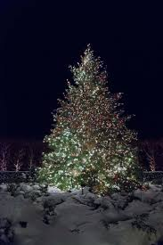 343 best christmas trees and more images on pinterest christmas