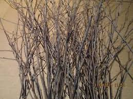 Decorative Stems For Vases Decorative Twigs Ebay