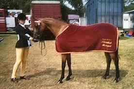 Kent Rugs Equestrian Embroidery On Rugs And Blankets Jb Embroidery Ashford