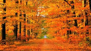 autumn path soapin u0027spiration fall desktop