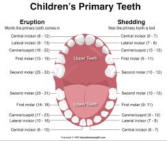 All You Need To Know by All You Need To Know About Baby Teeth Care Justkiddi