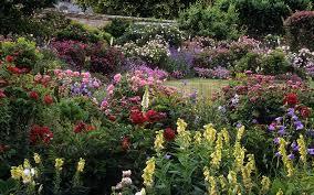mottisfont abbey rose gardens hampshire uk the best ro u2026 flickr