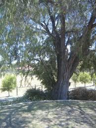 trees had a haircut today rhonda bracey at random
