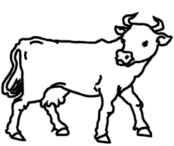 dairy cow outline coloring pages netart