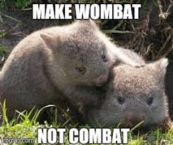 Wombat Memes - image tagged in wombat memes funny memes cute imgflip