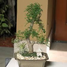 shop plants u0026 planters at lowes com