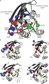 415 best dna images on pinterest molecular biology genetics and
