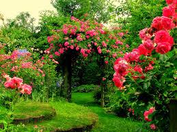 flower house garden flower with house fresh flowers