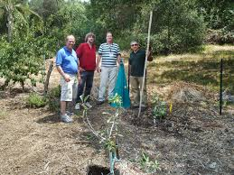 non native plants in california cisr blog cisr blog the official blog of the center for