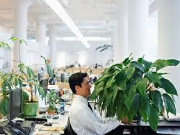 plante verte bureau les plantes vertes au bureau bonnes pour la productivité biba