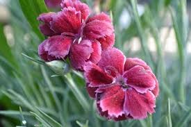 flower gardening 101 gardening lingo 101 frankie flowers grow eat live outdoors