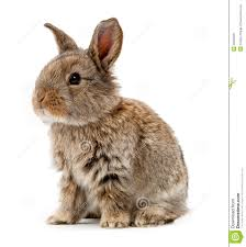 rabbit isolated on a white background royalty free stock photos