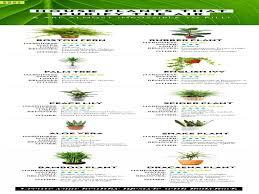 best house plants best indoor plants best indoor plants 10 best indoor plants
