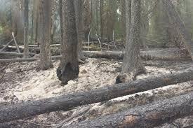 Wildfire Kootenays by Loki Tree Service U2013 Arborist U0026 Contracting Services In The West