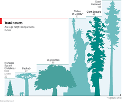 Trees And Their Meanings Climbing The World U0027s Biggest Tree