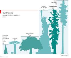 climbing the world u0027s biggest tree seqouiadendron giganteum