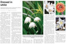 native houston plants bulb u0026 plant mart info the garden club of houston