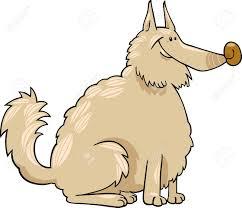 american eskimo dog vector cartoon illustration of shaggy purebred eskimo dog or spitz or