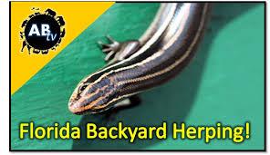 Backyard Reptiles Florida Backyard Herping The Python Hunter Animalbytestv