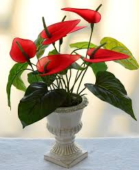 Indoor Plants That Don T Need Sun 10 Easy To Grow Indoor Plants In India Interior Design Ideas