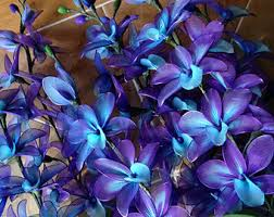 purple and blue flowers purple and blue orchid flowers stem flowers flower plant