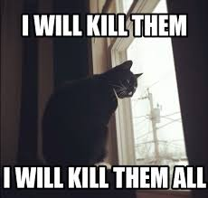 Murder Meme - this cat is plotting a murder most foul memes
