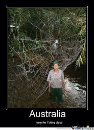 Funny Spider Meme Pictures To - australian spider web by nickybro meme center