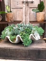 beautiful and creative ways to display succulent plants plants