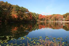 fall foliage york central park catskills