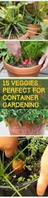 15 veggies perfect for container gardening gardening hacks