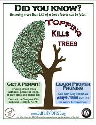 don t top that tree here s 5 steps for safe structural pruning