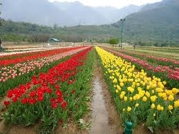 india culture flowers are a very distinct part of indian culture