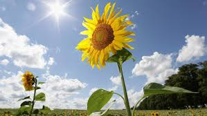 Plants That Do Not Need Much Sunlight by What Percent Of The Sun U0027s Energy Do Plants Use Reference Com