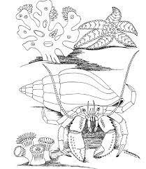 underwater dinosaurs coloring pages underwater sea life coloring pages get coloring pages