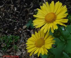 plante vivace soleil jardin des plantes d u0027ombre le jardin de nanny