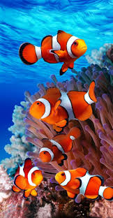 5097 best ocean life images on pinterest nature earth and feather