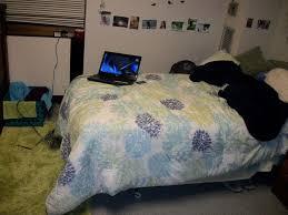 Bedding Sets Blue College Dorm Bedding Sets